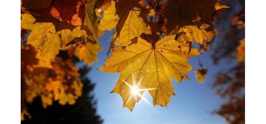 Златна есен ни очаква следващата седмица, след студовете, дъжда и