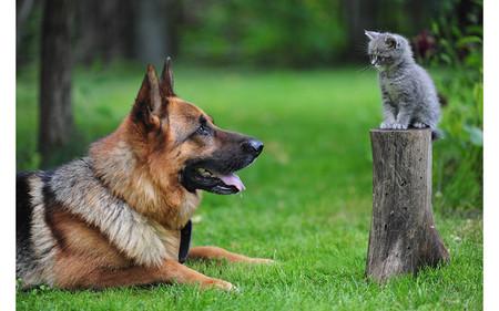 Котки и кучета могат да виждат ултравиолетовите лъчи с просто