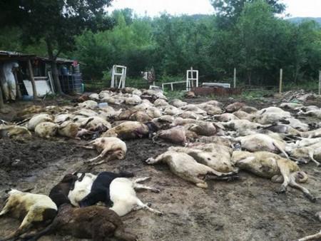 Погромът, който държавата извършва в Странджа с масовите кланета на